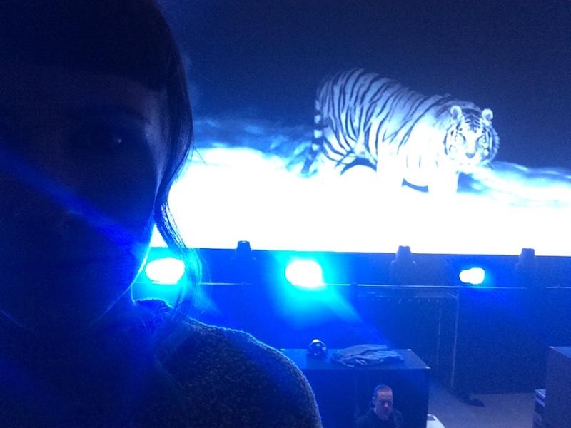 Hjälp! Det är en tiger bakom mig